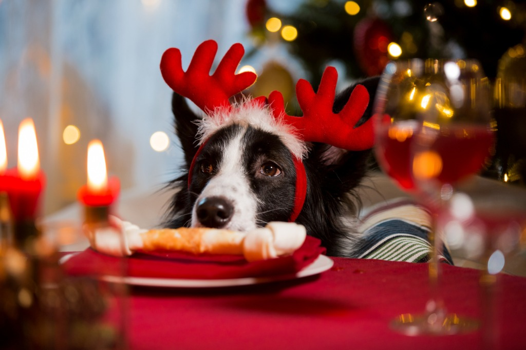 Dog in a Christmas table