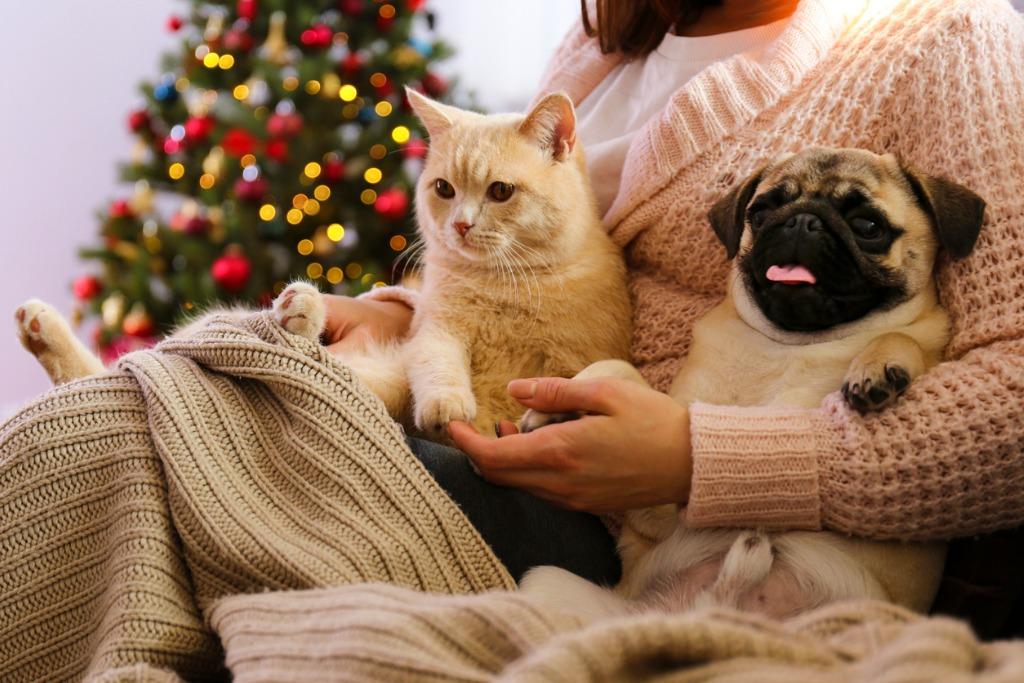 Cat and dog at home with christmas decorations in the background