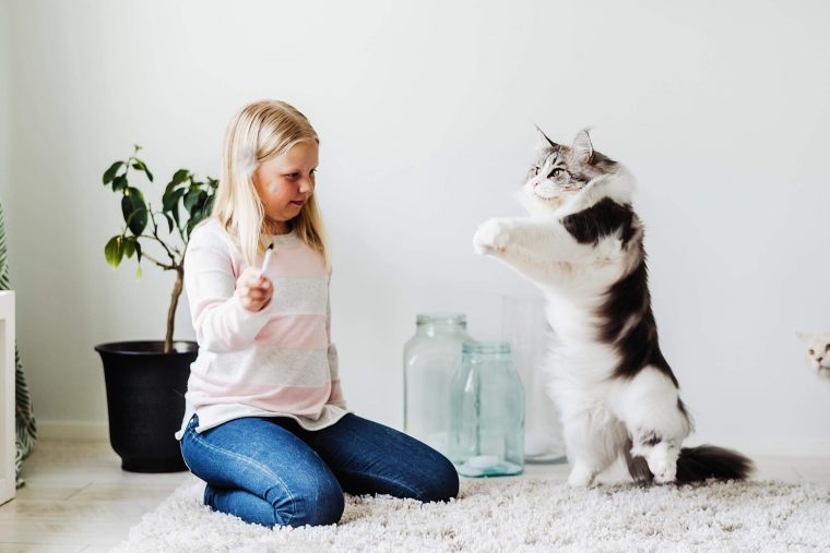 A Child Playing WIth Cat
