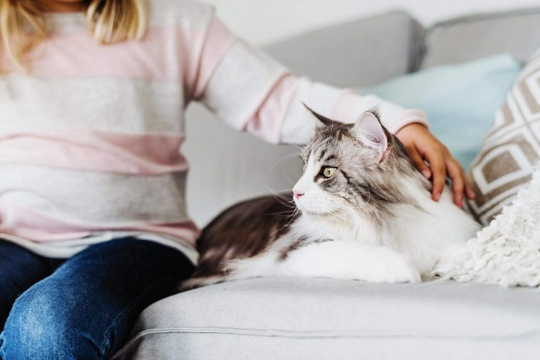 Little girl stroking a cat on the couch