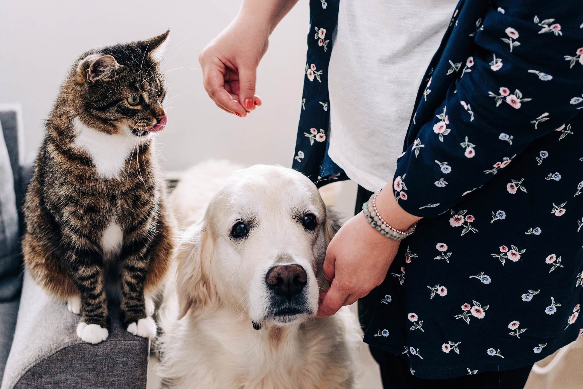 Owner training cat and dog with a treat