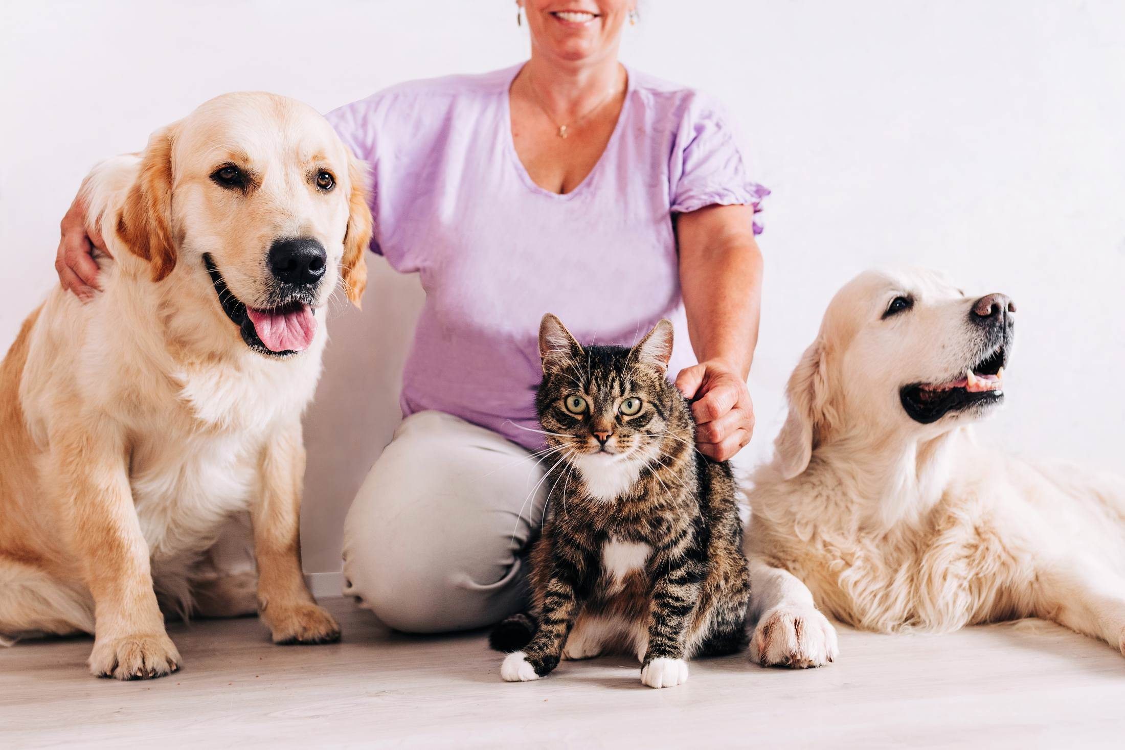 Two dogs and a cat with their owner on the floor