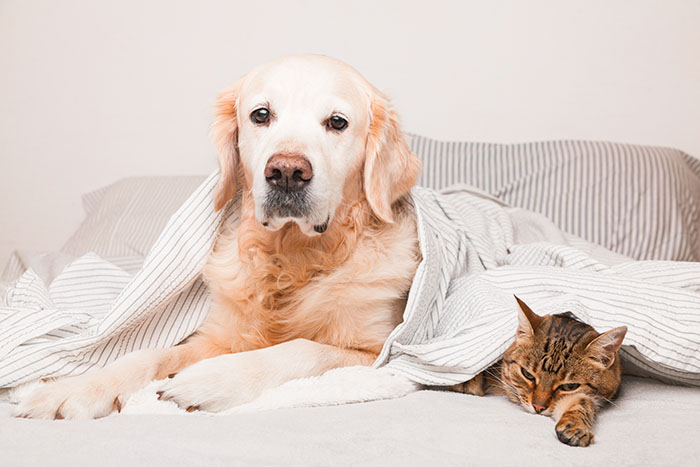 dog scared of noise in bed with cat