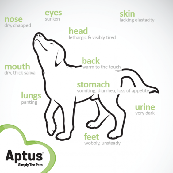 Signs Of Dehydration of Dogs